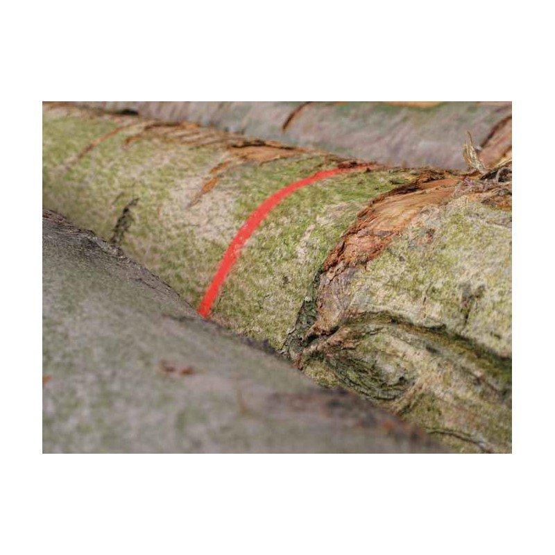 FLUO MARKER - medienos žymėjimo dažai [12-24 mėnesiai]